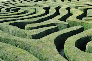 image of a hedge maze